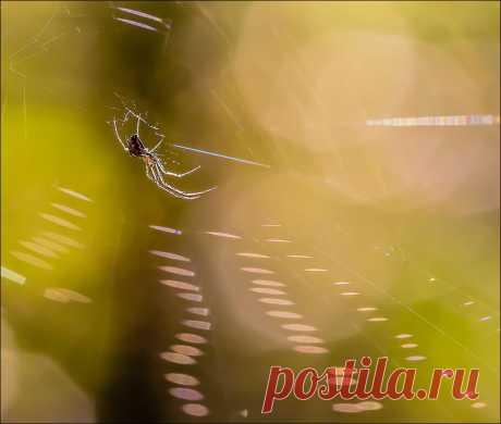 Фотография пользователя Андрей Бурлов - Дзинь)) из раздела макро №5420973 - фото.сайт - Photosight.ru
