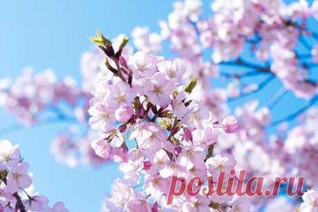 А на пороге - нежная Весна, Что лёгкою походкой приближаясь, Спешит в сердца, совсем не сомневаясь, Что, словно воздух, нам сейчас нужна! (с)