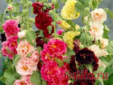 Каталог многолетних цветов для дачи: фото с названиями и описанием растений
