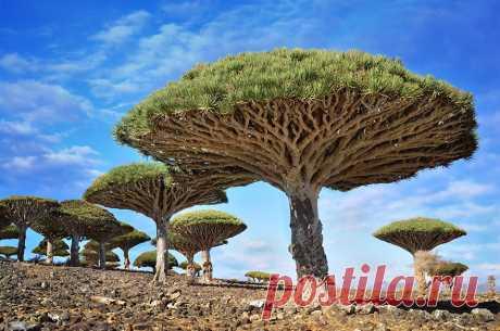 Самые великолепные и красивые деревья мира!
