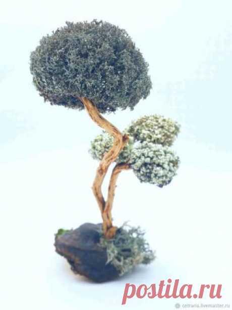 Подарок к празднику - живое Дерево из цетрарии – купить в интернет-магазине на Ярмарке Мастеров с доставкой Подарок к празднику - живое Дерево из цетрарии - купить или заказать в интернет-магазине на Ярмарке Мастеров | Утонченное дерево на чаге и стволе из…