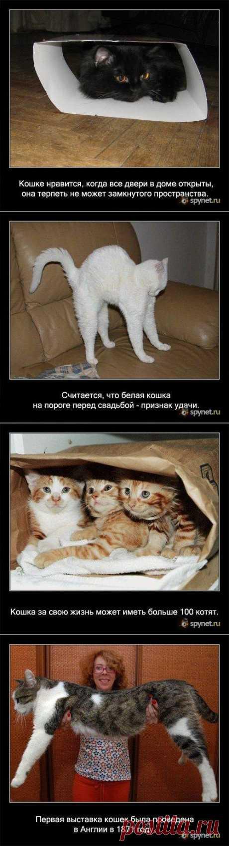 (+1) тема - Некоторые факты о кошках | Четвероногий юмор