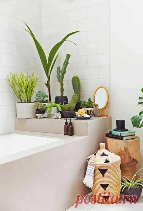 Растения для ванной комнаты без окон - Цветочки - медиаплатформа МирТесен