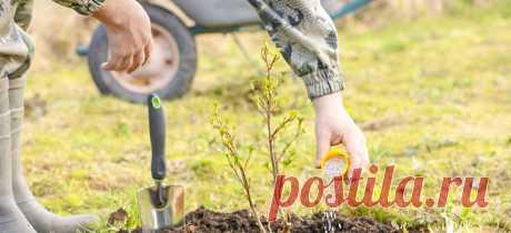Удобрения в августе: подкормки в цветнике, саду и огороде | Полезные статьи на блоге Беккер