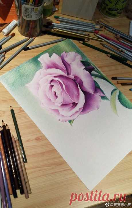 We draw a rose