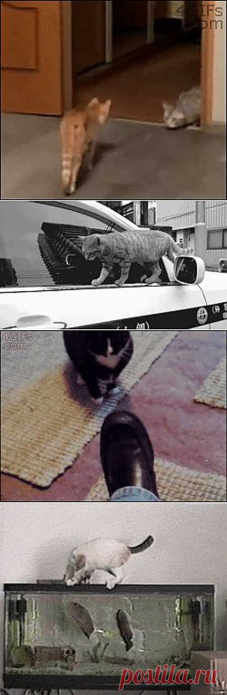 Смешная кошачья анимация | ТурПрикол