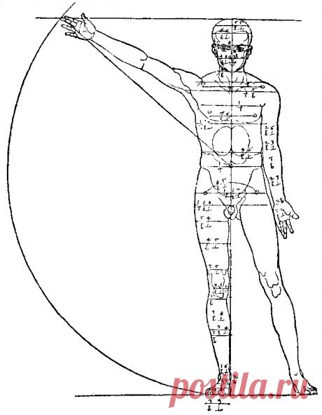 Анатомия человека — Википедия