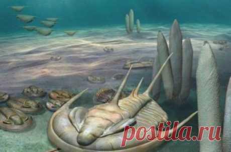 Им около 500 миллионов лет