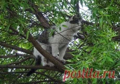 #на дереве   #кошки