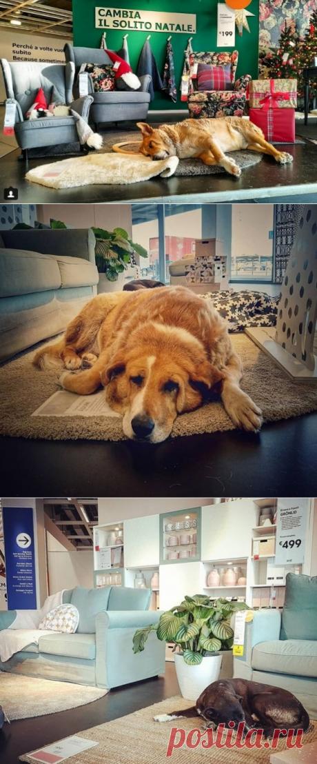 Сицилия: IKEA в Катании приютила бездомных собак - новости Италии