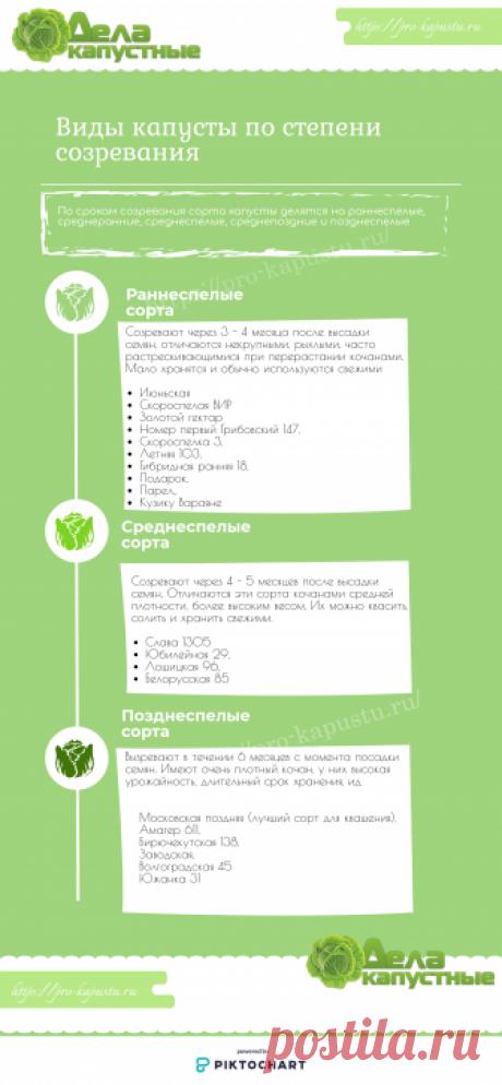 Как выращивать рассаду белокочанной капусты в домашних условиях