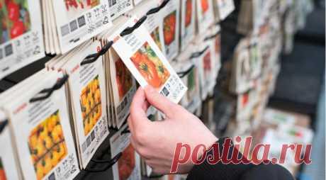 Что покупать для сада в январе и феврале: шпаргалка новичкам на Supersadovnik.ru