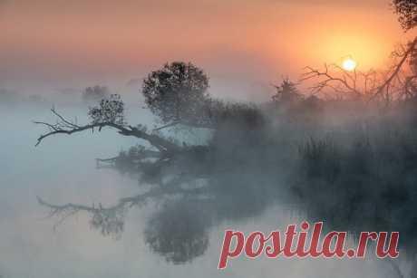 «Давно упавшее дерево, сломанное натиском бури, не сломлено временем», – описывает свой снимок Андрей Соколов: nat-geo.ru/photo/user/122313/