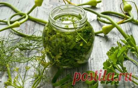 Зелёная заправка для салатов на зиму   Огород на подоконнике   Яндекс Дзен