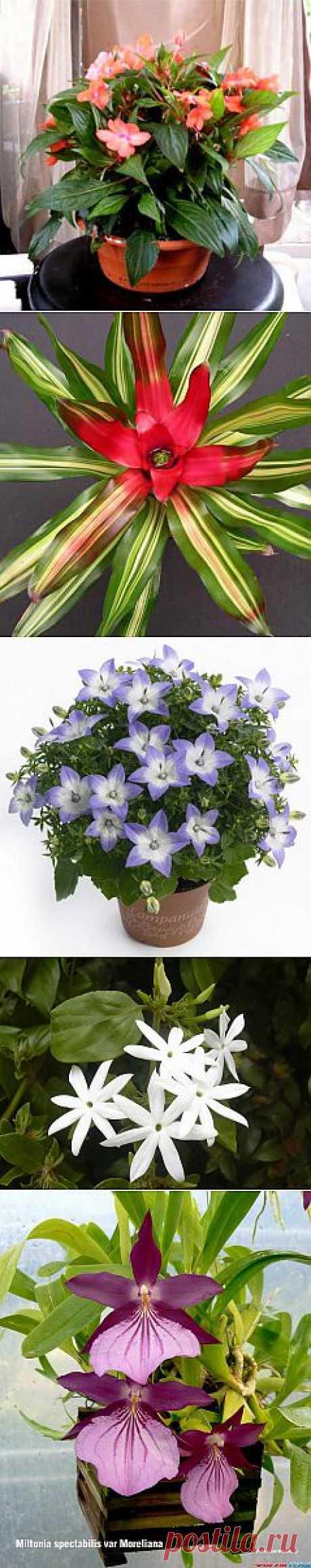 домашние Цветок Вид - Домашние растения. Цветы.