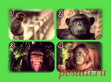 Тест на непосредственность - Выберите обезьянку | ГОРНИЦА