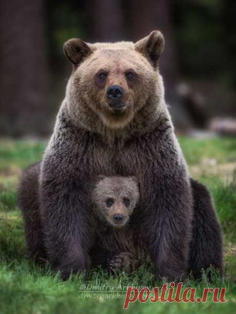 Family portrait in a forest interior