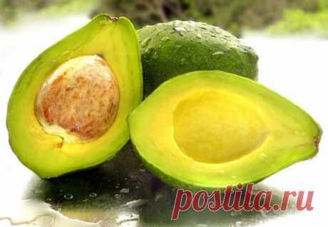 Как хранить авокадо :: авокадо в домашних условиях форум :: Продукты питания :: KakProsto.ru: как просто сделать всё