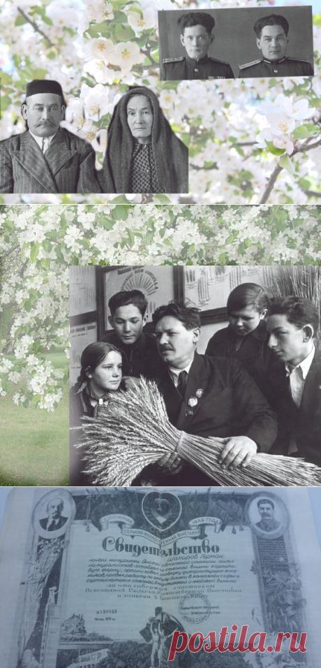 Загир мечтал разводить сады, но вслед за тремя братьями ушел воевать. Он погиб в 18 лет, но успел оставить новые сорта плодов и сады | Mun Ira | Яндекс Дзен