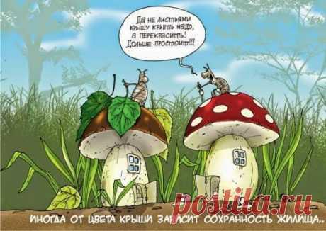 Анекдоты про грибы и грибников: 10 тыс изображений найдено в Яндекс.Картинках