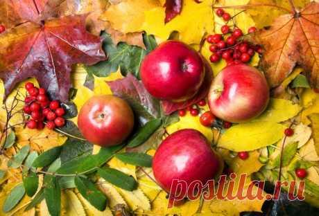 Закрываем сезон – 7 дел, которые нужно сделать в саду в октябре | Уход за садом (Огород.ru)