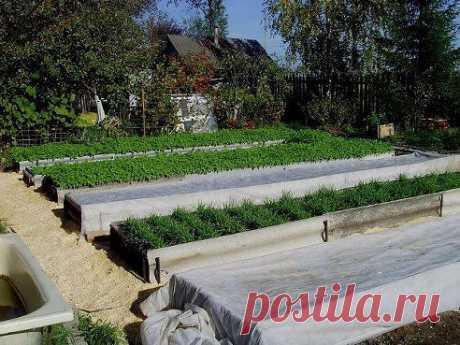 Изюминки нашего сада..Добавленафотография в альбомСЕКРЕТЫ ДАЧНИКА!...1-2-3 фото...ИДЕИ для...