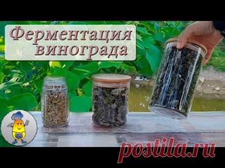 Ферментация виноградных листьев для чая - все шаги от А до Я Ферментация виноградных листьев для приготовления чая - крайне интересный и захватывающий процесс, можно сказать настоящая магия вкуса! Я покажу вам все этап...