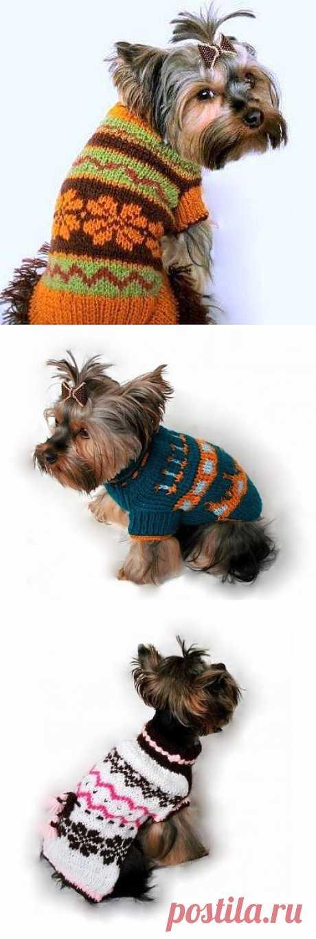 Вязанье для собачек.