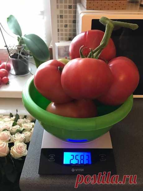 100000 rubles - for tomato. The largest brush. Crimson dream