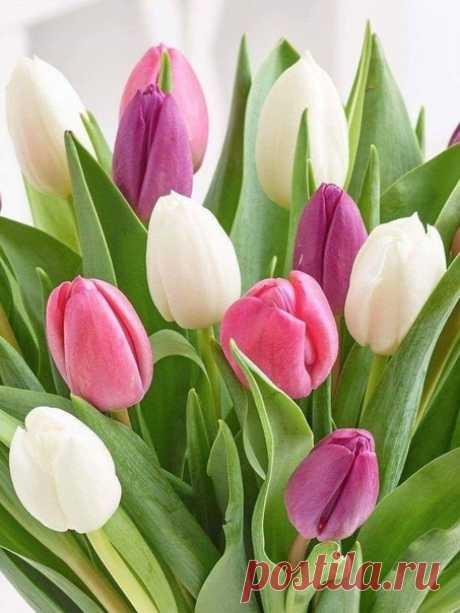 И пусть за окном обжигающий снег, И холодно звездам на крыше – Тюльпаны, тюльпаны поют о весне. О счастье, о радости. Слышишь?  © Надежда Буранова
