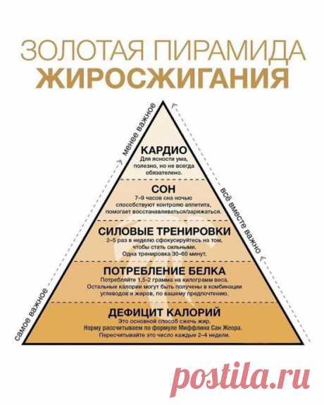 Золотая пирамида жиросжигания