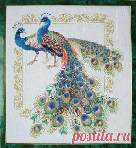 Обворожительно красивые птицы, схемы вышивки крестом — Рукоделие