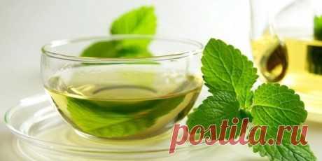 Свойства зеленого чая помогут сохранить здоровье — Мегаздоров