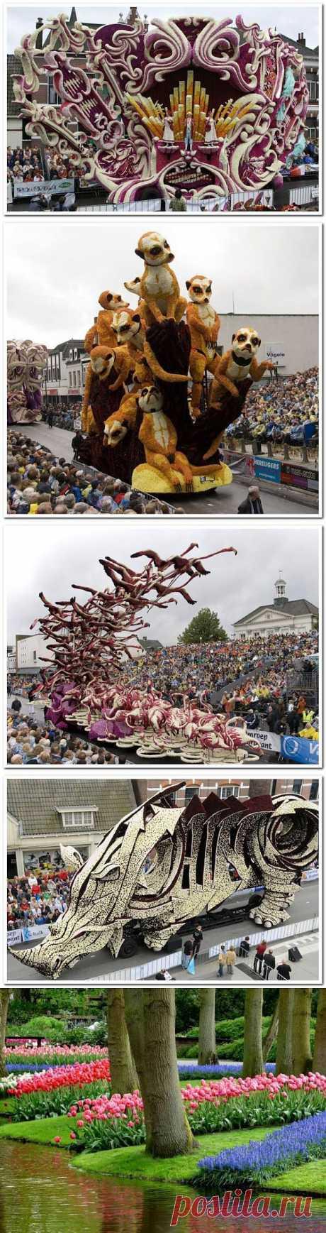 Чудеса света. Парад цветов. Нидерланды - Ярмарка Мастеров - ручная работа, handmade