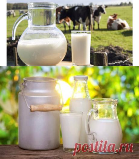 Как пастеризовать свежее молоко дома. 3 проверенных способа | Десертный Бунбич | Яндекс Дзен