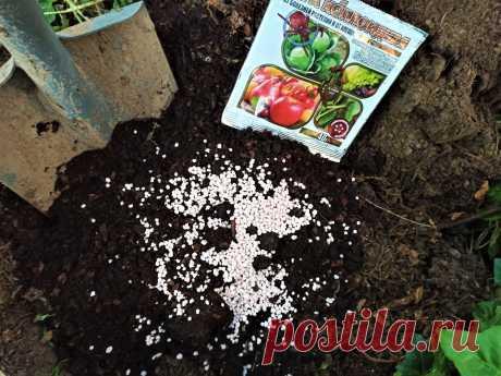Как посадить метельчатую гортензию, чтобы она обильно цвела и радовала вас долгие годы | GardenLife | Яндекс Дзен