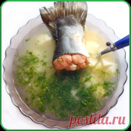Уха из головы семги вкусный рецепт приготовления