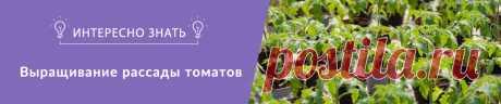 Выращивание рассады томатов | Интернет магазин семян Semena.in.ua