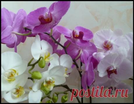 Как заставить орхидею цвести: 4 рабочих способа!