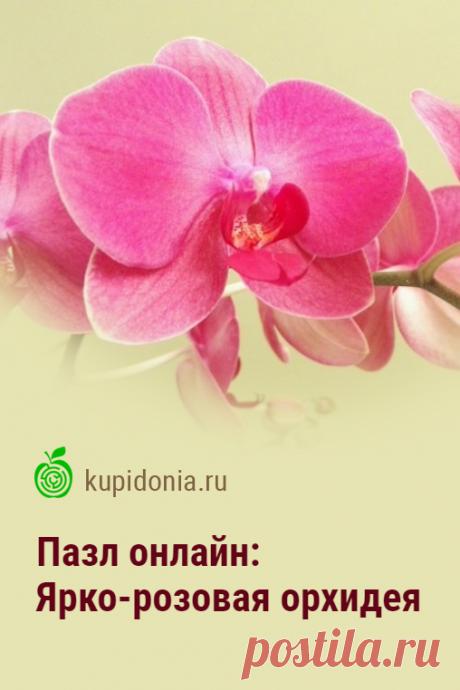 Пазл: Ярко-розовая орхидея. Красивый пазл онлайн с яркой орхидеей. Собирайте пазлы на сайте! Это отличная тренировка для мозга.
