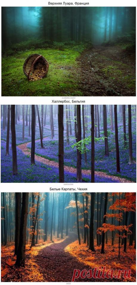 10 мистических лесов