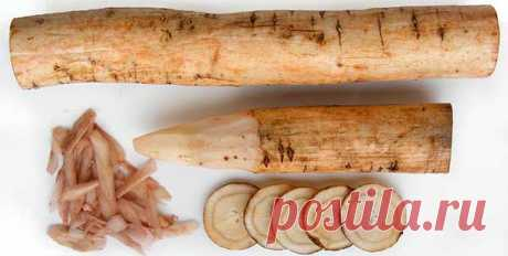 Корень лопуха - полезные свойства и противопоказания Какие существуют лечебные свойства у корня лекарственного растения лопуха. Есть ли противопоказания и каковы правила применения.