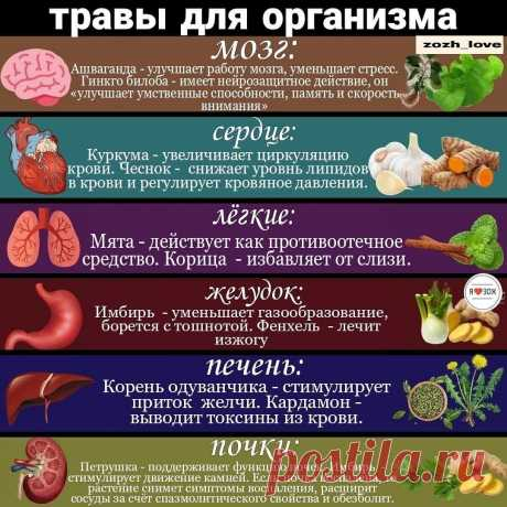 Как определенные травы влияют на организм