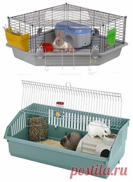 Какой должна быть клетка для декоративных кроликов? | Грызунчик