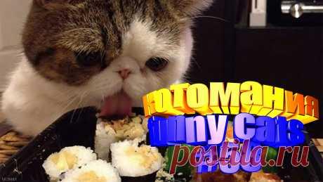 видео коты смешные, смешное видео коты, коты смешное видео, смешное видео котов, кот том видео, приколы коты видео, видео приколы котов, кот видео, видео с котом, видео смешные животные, видео смешных животных, смешное животное, про смешных животных, видео коте, приколы коты, прикол с котом, приколы с котом, коты и приколы, кошки смешные видео, про кошек смешное, смешное кошки, про кошек смешных, смешное видео кошка, смешное кошка видео, про смешно кошек, кошки и смешные, видео про кошек