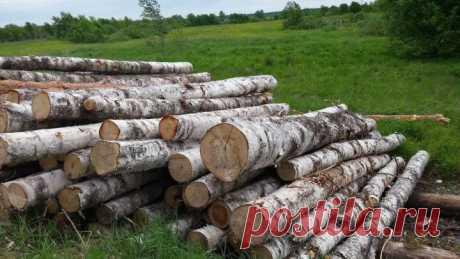 Каждому Россиянину раз в 25 лет можно получить 150 кубов леса бесплатно   Интересно Знать   Яндекс Дзен