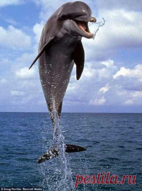 А дельфины добрые...