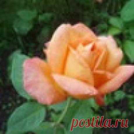 Людмила Югай (Филиппова)