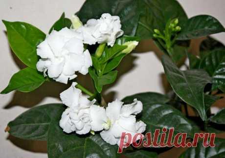 Растение, которое цветет практически весь год и очищает воздух в доме | Все о домашних цветах | Яндекс Дзен