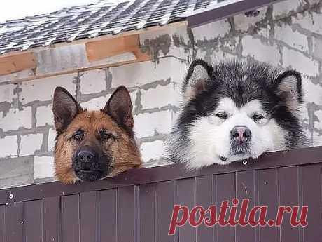 Любим мы наблюдать за прохожими... Некоторые с перепугу даже ЗДОРОВАЮТСЯ ))